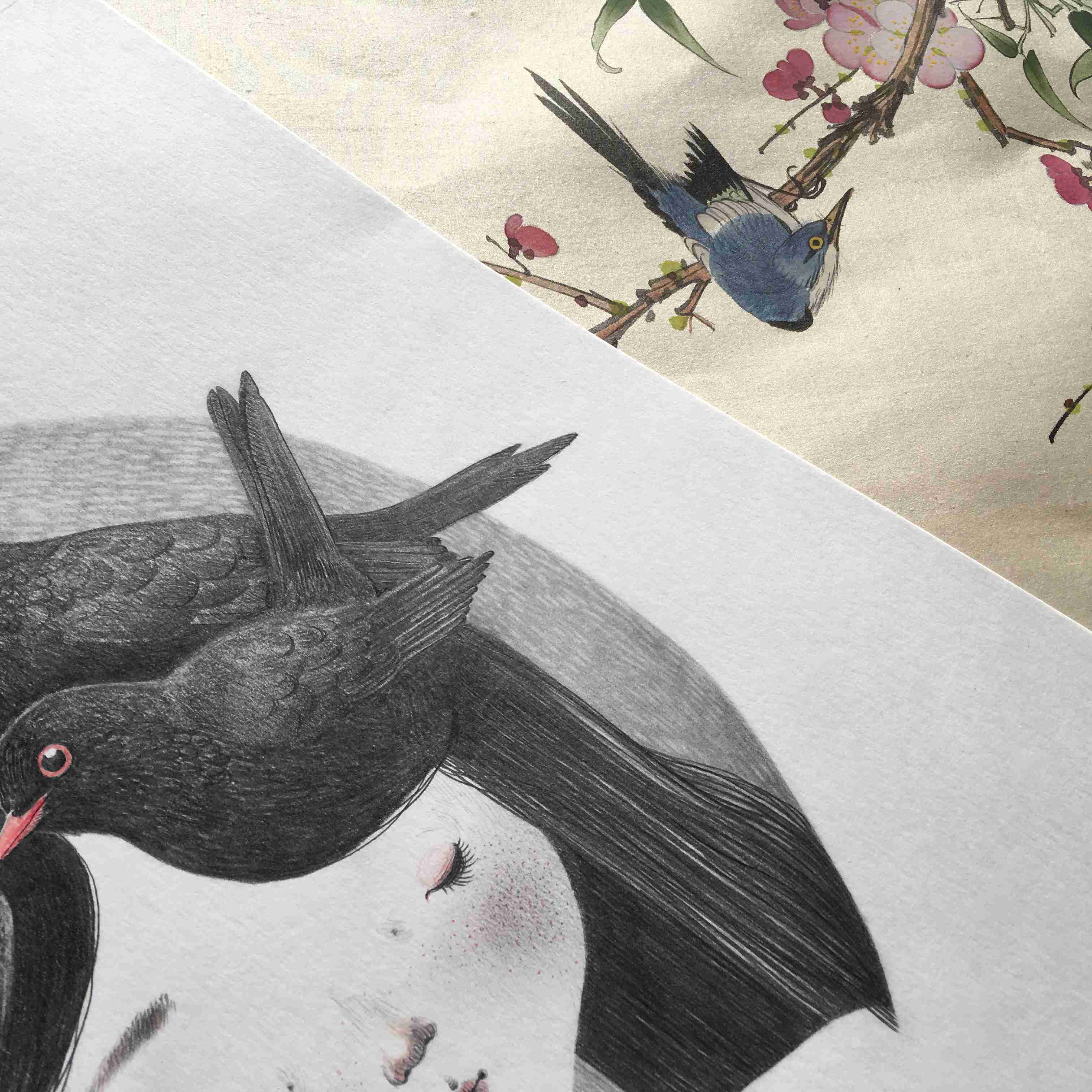 seforapons-graphite-coloured pencils-girl-blackbird-symbiosis-kurotadorichan-2