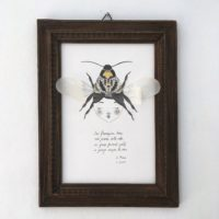 seforapons-graphite-collage-goldleaf-proserpina-bee